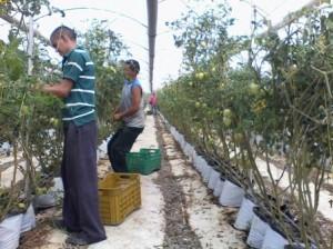 Cultivo (2)